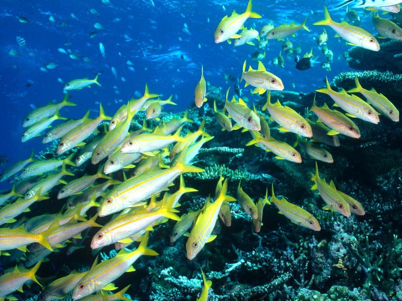 Quale animale marino sei? [TEST]