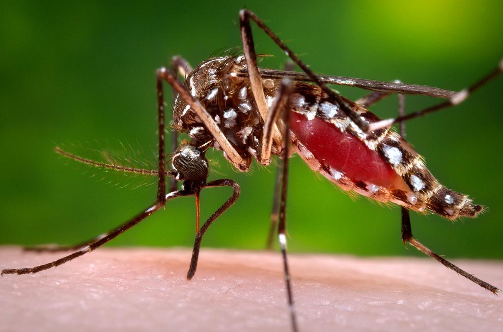Malattie tropicali: prevenzione, sintomi e cure