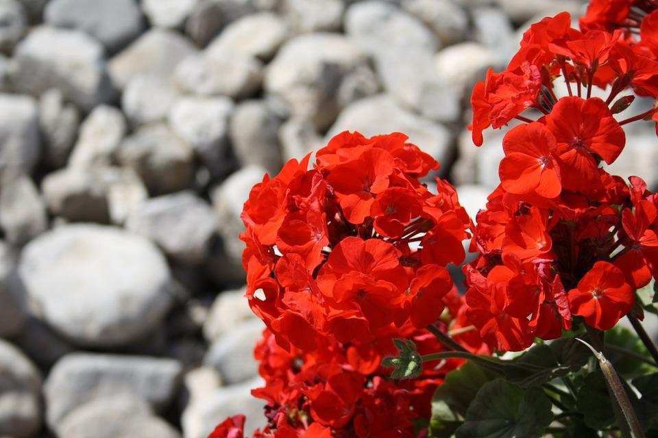 Piante e fiori di luglio: una guida utile