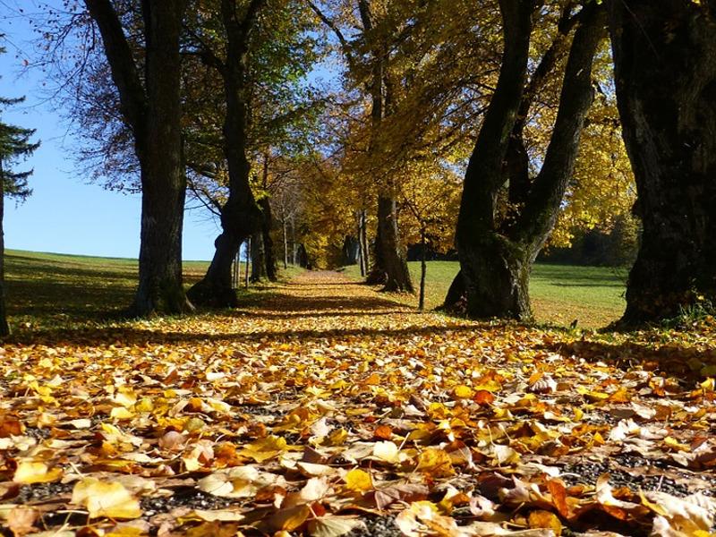 10 cose che non sai sugli alberi