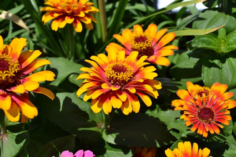 Che fiore autunnale sei? [TEST]