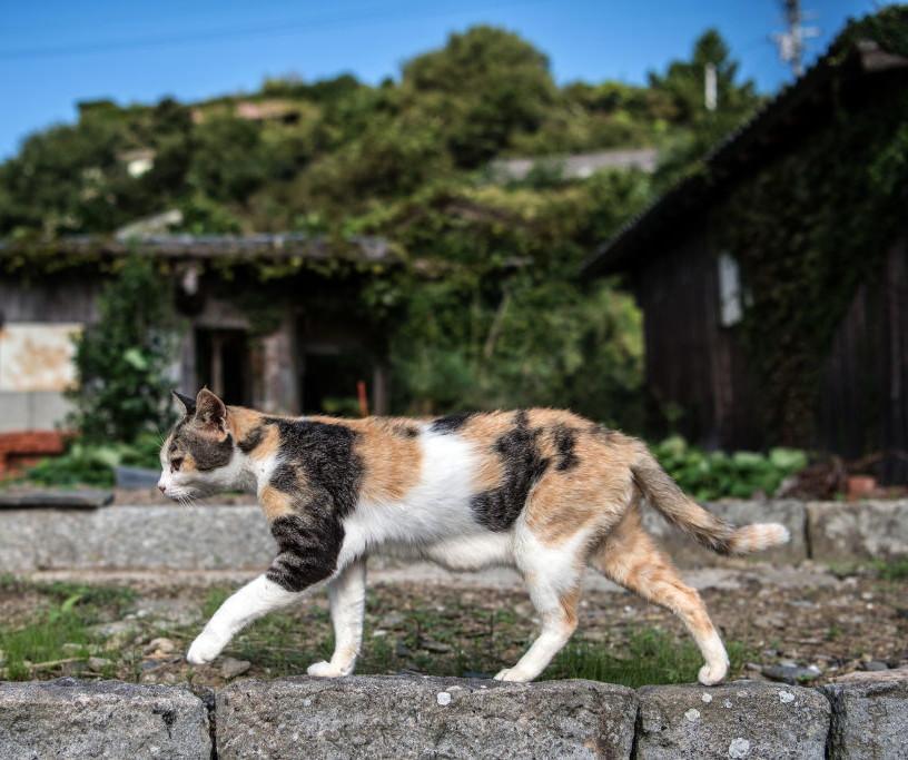 Isola dei gatti in Giappone