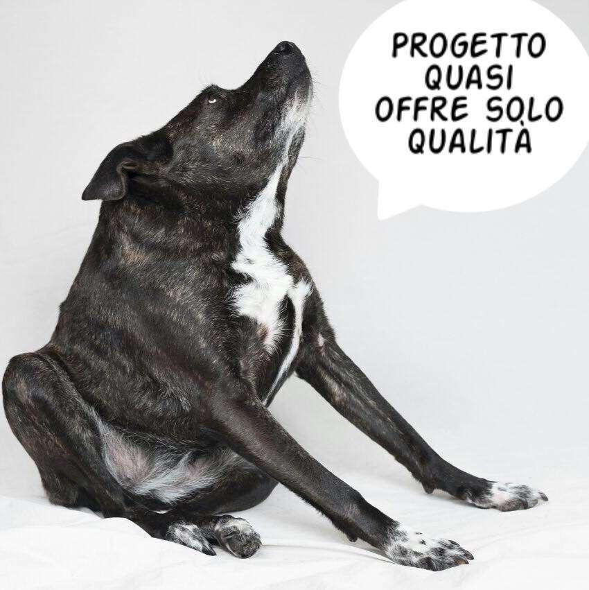 Progetto Quasi: adotta anche tu un cane disabile, sfascione e quasi tiepido