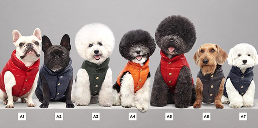 Piumini Moncler linea per cani