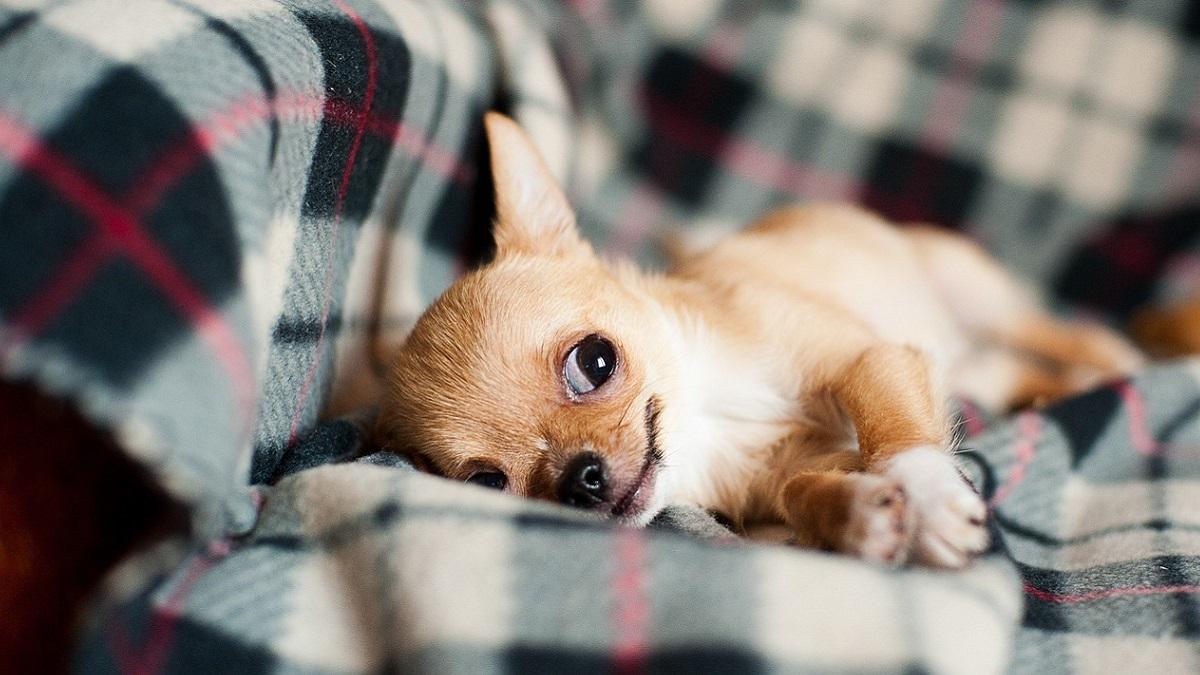 Lancia i cuccioli della moglie dal balcone: 'Ami i tuoi cani più di me'