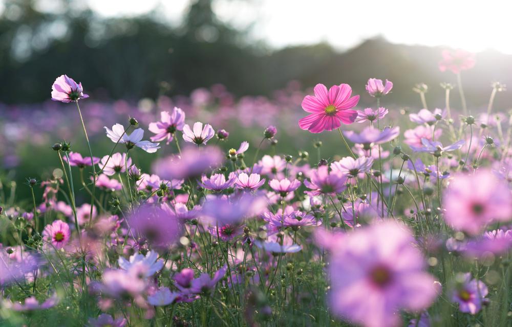 Le piante che fioriscono in primavera