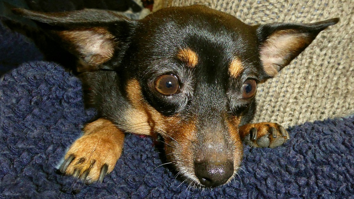 Ruba il cane a un'amica lo uccide e brucia il corpo: accusata di crudeltà aggravata verso gli animali