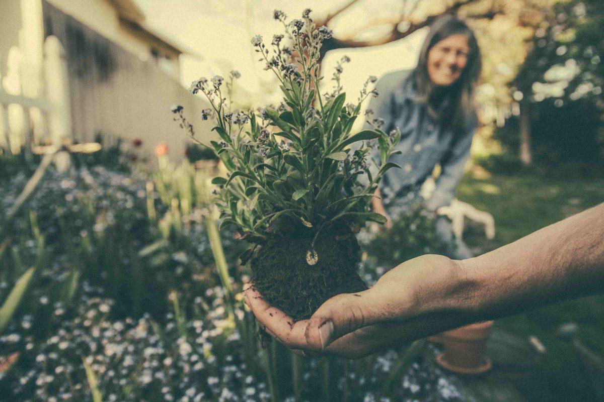 piante e giardinaggio