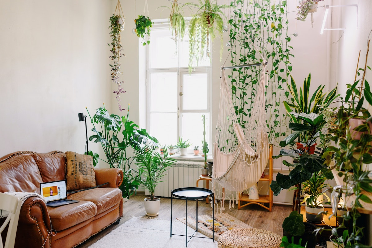 appartamento plant influencer piante fiori