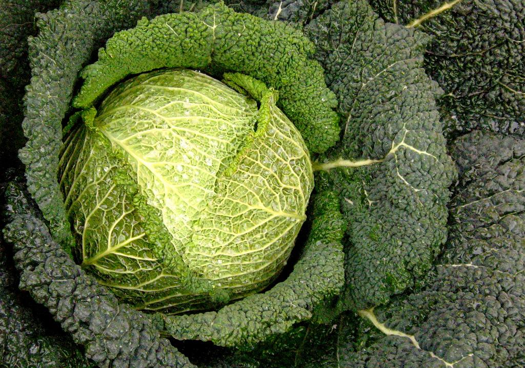 Ricette con la verza in padella o stufata