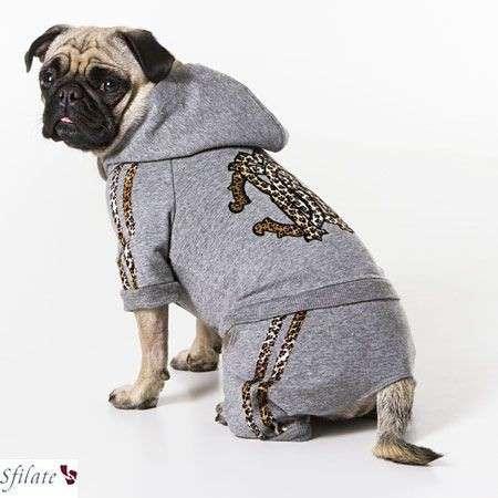 Roberto Cavalli Pets accessori cani