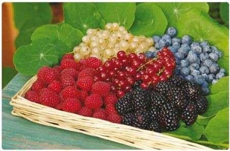 I frutti di bosco per riscoprire il benessere