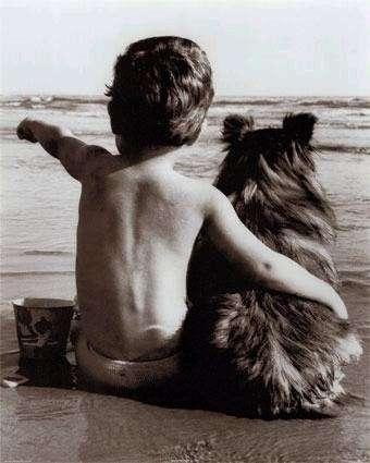 Cani in spiaggia: dove si può