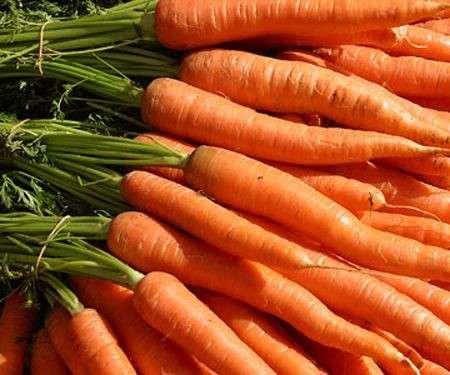 Semina in agosto: le carote e il prezzemolo