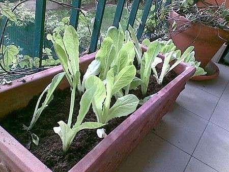 Come preparare l'orto sul balcone