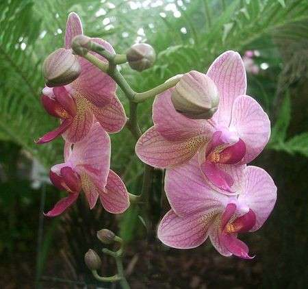 Come curare le piante: le orchidee