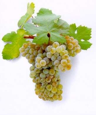 Integratori naturali, l'uva