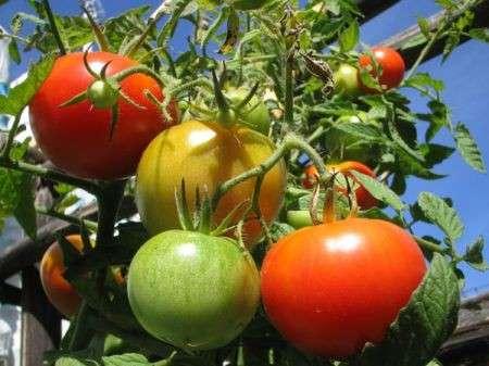 Italia: leader mondiale nel biologico e nel cibo tradizionale