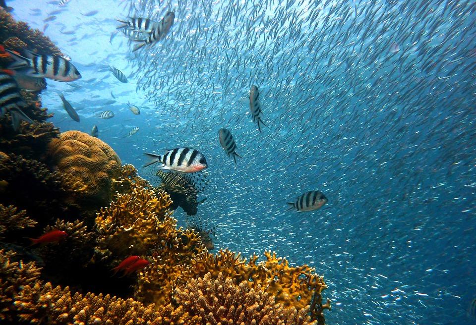 Curiosità: scoprire i mari con un corso di biologia marina