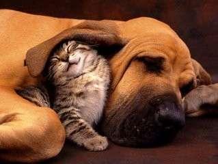cane e gatto sonnellino