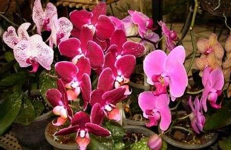 Come curare le piante: le orchidee da regalare a Natale