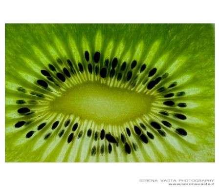 kiwi serena vasta photography