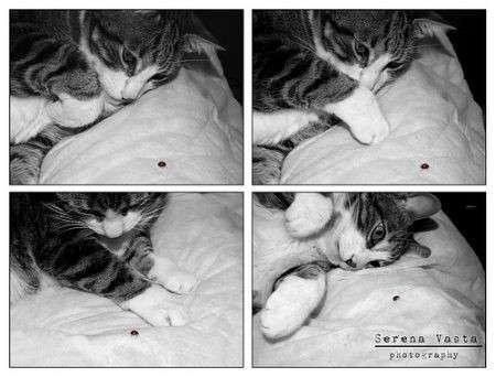 gatto e coccinella