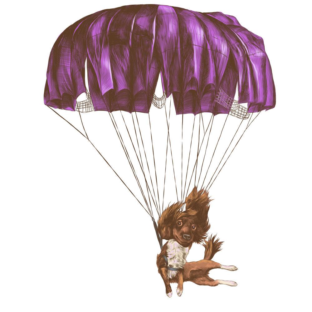 Animali: cani soldato paracadutisti