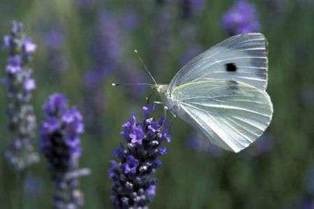 Animali: pericolo estinzione per farfalle, scarabei e libellule