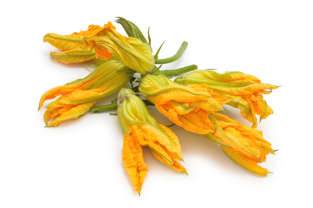 Cucina: ricetta Sformatini di riso ai fiori di zucca