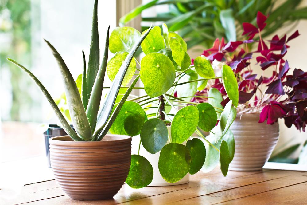 Come ridurre i rischi di casa con le piante