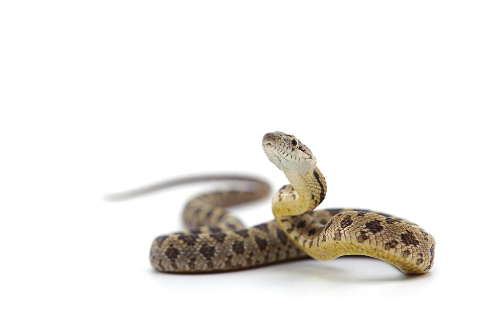 Creare una teca per serpenti