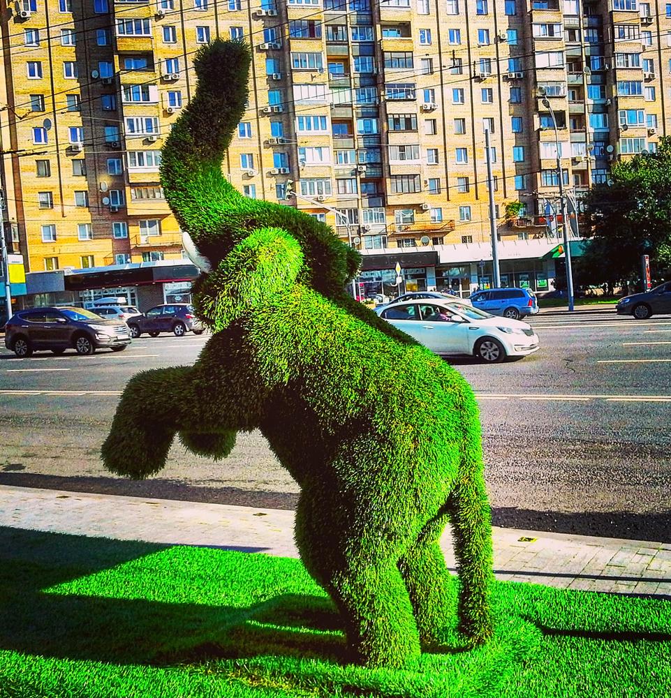 Giardinaggio: l'arte topiaria