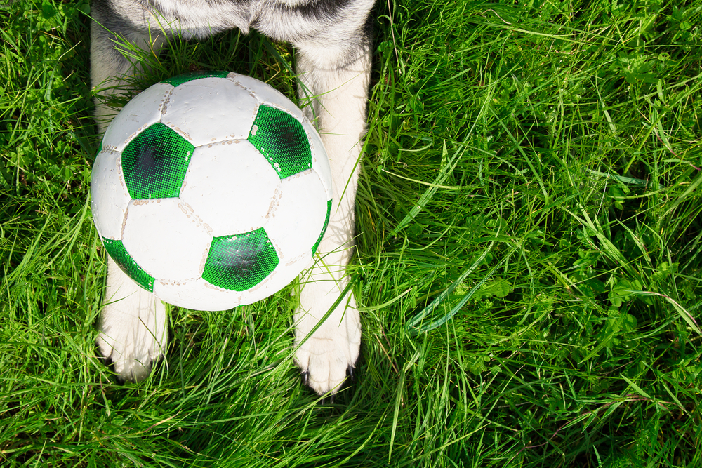 Cane calcio