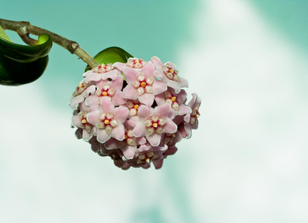 Fai da te: i fiori di cera