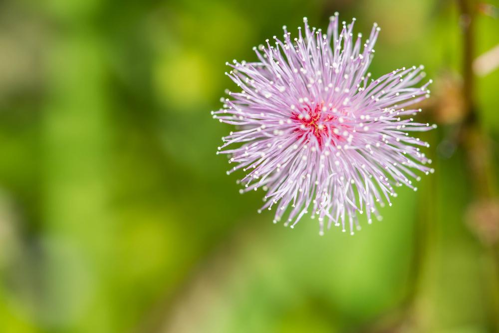 Giardinaggio: la pianta che si muove