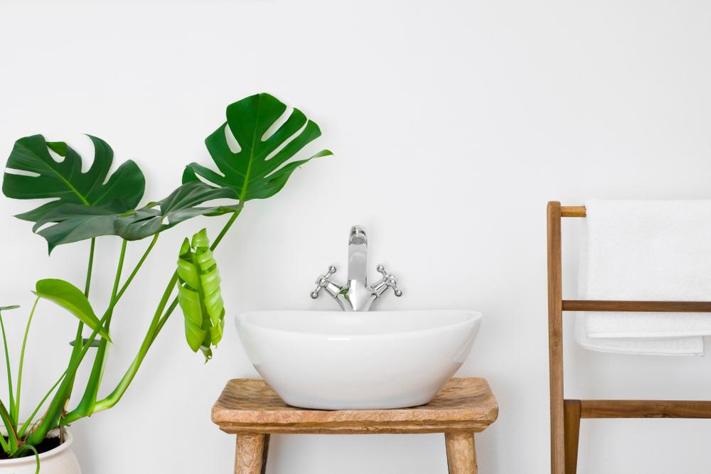 Arreda il bagno con una pianta