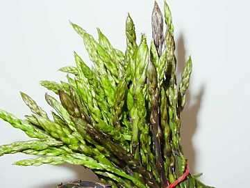 Verdure dimagranti: gli asparagi