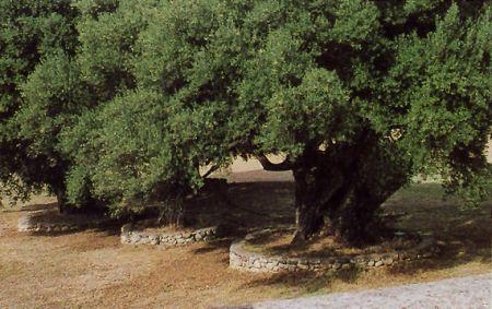 Giardinaggio: realizzare un muretto a secco per l'aiuola
