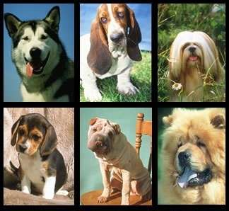 Animali: quale cane saresti?