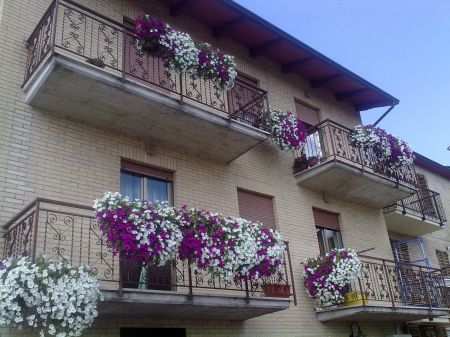 Scegli la pianta giusta per abbellire il tuo balcone