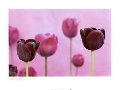 Tulipani: qual è il loro significato?