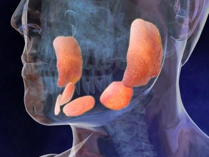 Le ghiandole salivari: anche loro si ammalano
