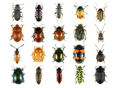 allevare insetti