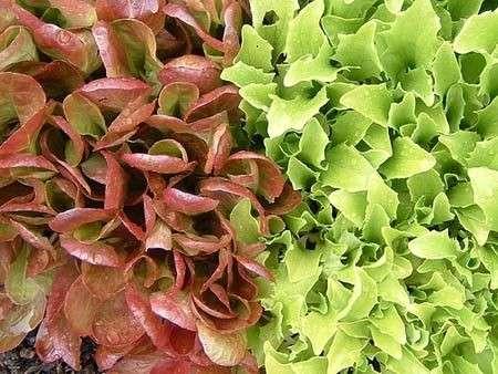 Diabete, si previene con le verdure a foglia verde