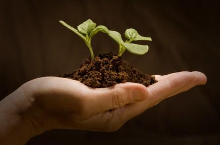Come coltivare: tutti i segreti per un orto fai da te