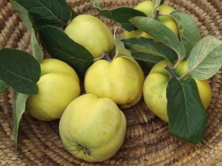 Rimedi naturali: la mela cotogna è afrodisiaca