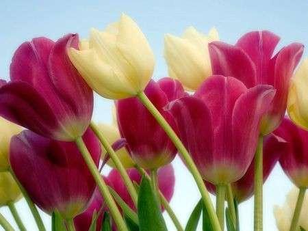 Come curare le piante: le bulbose