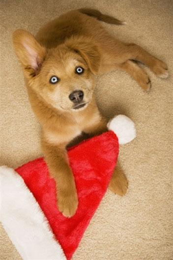 Regalare cuccioli per Natale: precauzioni sull'acquisto