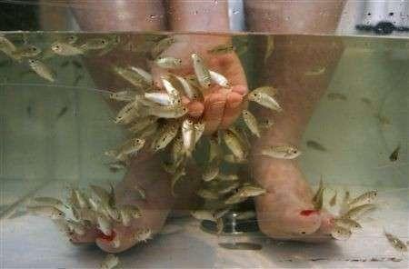Fish pedicure, vietato in Svizzera